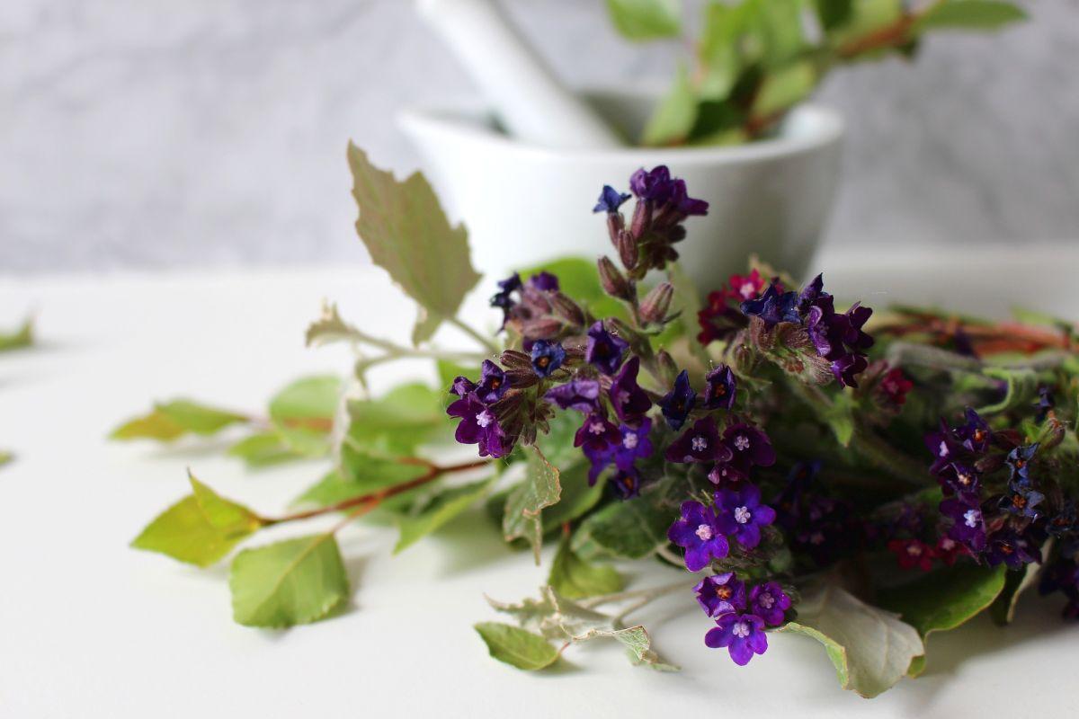 Los remedios herbales son un gran aliado en el tratamiento de dolores de cabeza y migrañas.