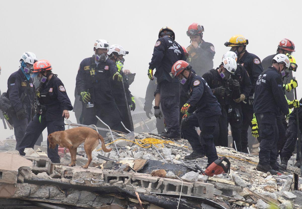 La unidad del Cuerpo de Bomberos de Miami-Dade cuenta con 9 equipos de búsqueda canina.
