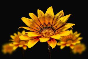 Flores amarillas: descubre el significado que existe detrás de ellas
