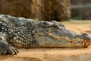 Sobrevivió a pesar de que un caimán le mordiera la cabeza