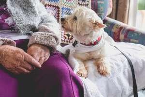 Ancianos le buscan hogar a su perra con la que han vivido 10 años; no la pueden llevar al asilo