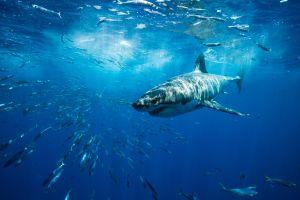 Piloto de drone ayuda a buzo que estaba siendo atacado por un tiburón