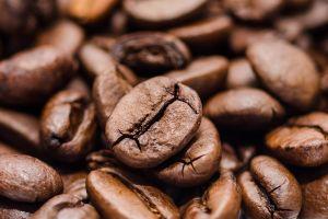 Finca Sophia: la granja de granos de café que cuestan $1,300 dólares la libra