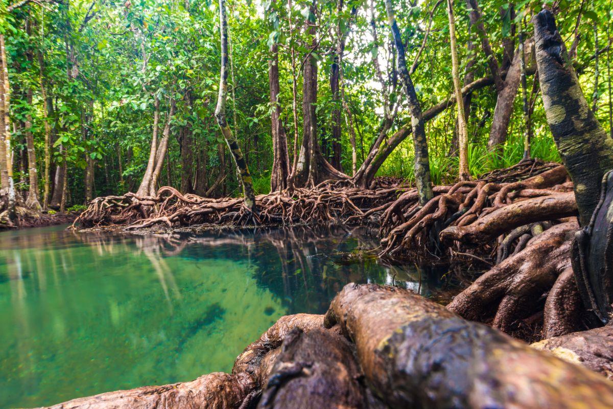 Los manglares son uno de los ecosistemas más fascinantes de nuestro planeta. Los de esta imagen están en Los Haitises, República Dominicana.