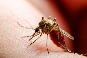Detectan en Estados Unidos mosquitos que transmite enfermedad que paraliza a las personas