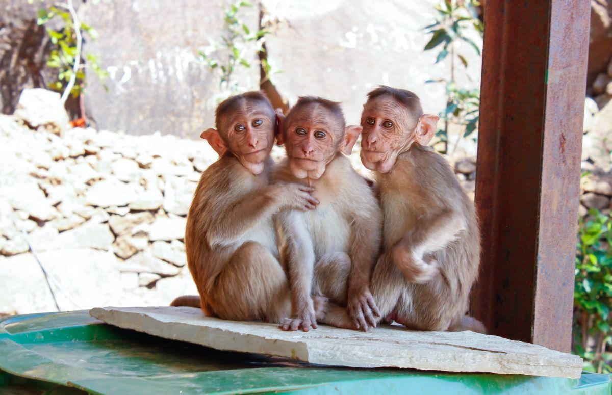 """China confirma la primera muerte de una persona por el raro """"virus B o virus del mono"""""""