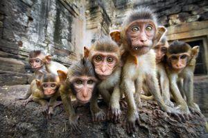 Pelea entre monos salvajes paraliza calles de Tailandia