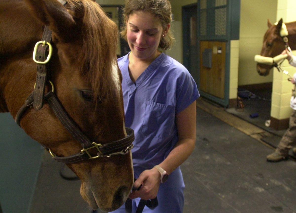 """""""No eres un caballo, no eres una vaca"""", la FDA advierte sobre uso de droga para animales contra COVID-19"""