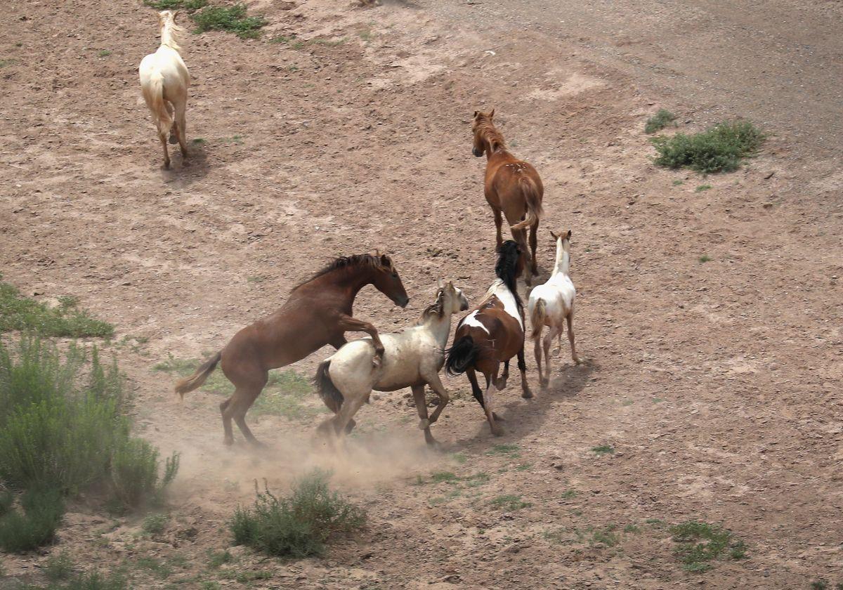 Caballos cerca del Río Grande en la frontera de Estados Unidos y México.