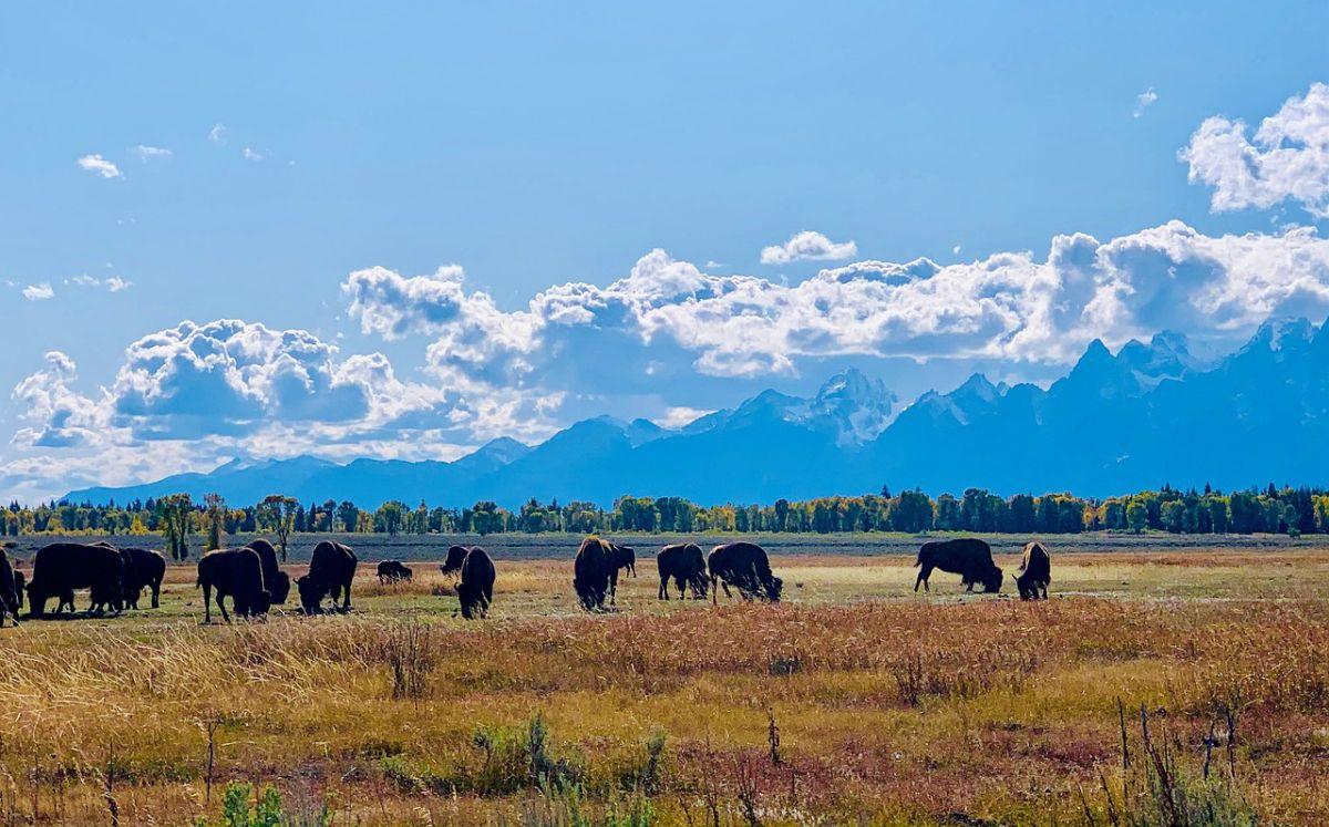Su último reporte con familiares fue el 25 de agosto mientras estaba en el Parque Grand Teton, en Wyoming.